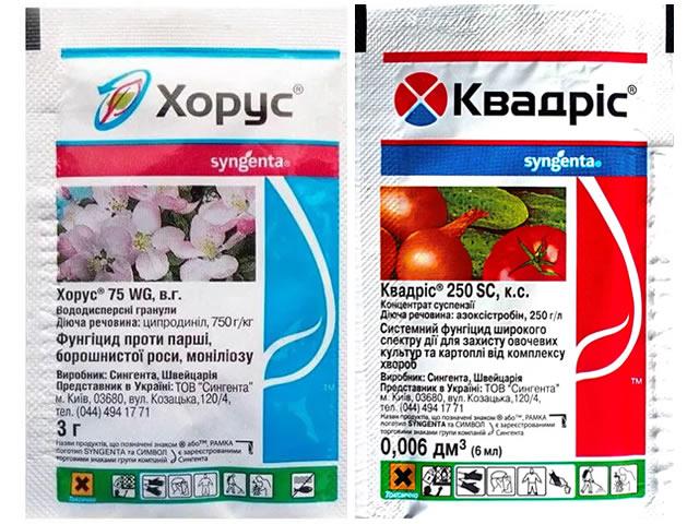 Хорус и Квадрис для профилактики грибковых заболеваний клубники