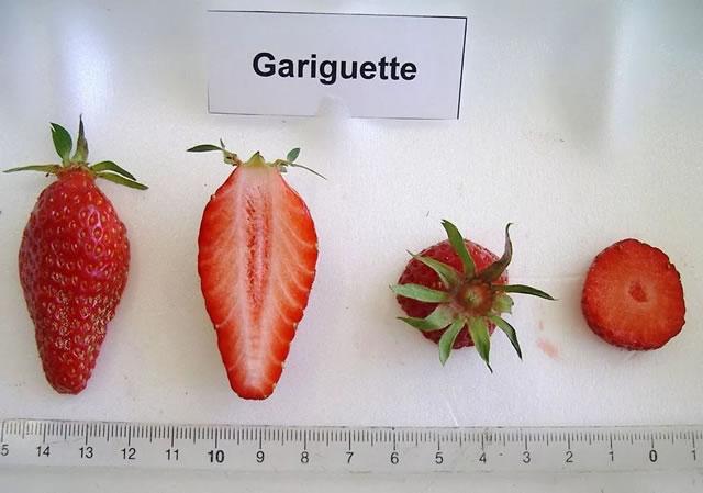 Ягода клубники Гаригуэтта в разрезе