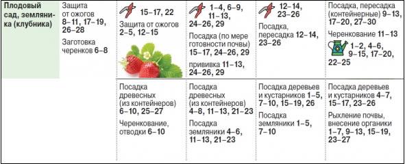 Лунный календарь работ по клубнике на 2019 г.