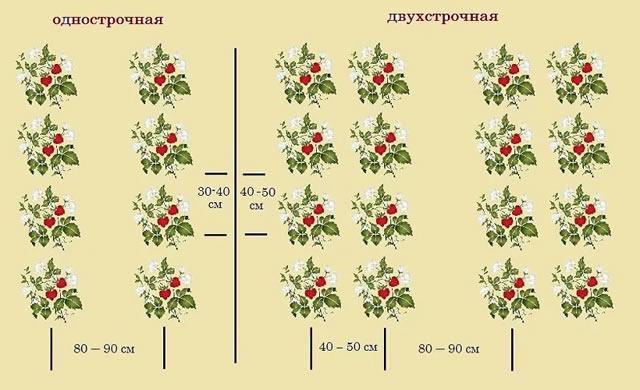 схемы посадки кустов клубники Элиане