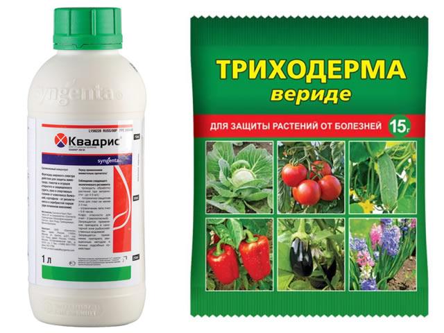 Квадрис и Триходерма вериде для защиты садовой земляники Соловушка от болезней