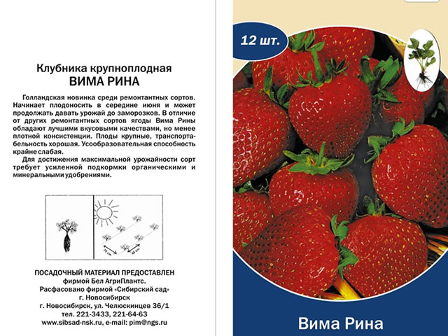 Пакетик семян клубники сорт Вима Рина