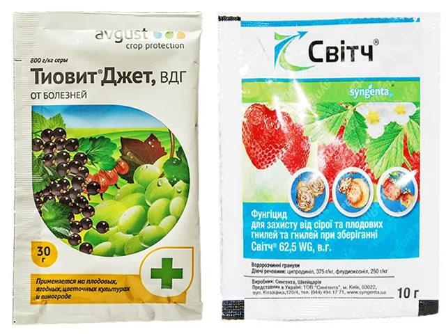 Препараты Свитч и Тиовит-Джет для защиты клубники от болезней и вредителей