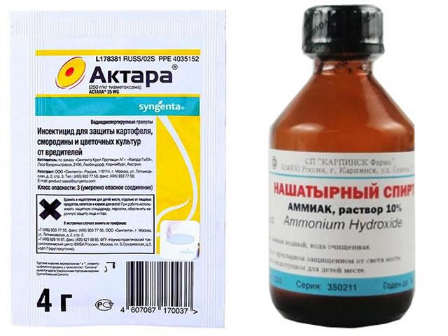 Актара и нашатырный спирт для защиты клубники Вима Кимберли от болезней и вредителей