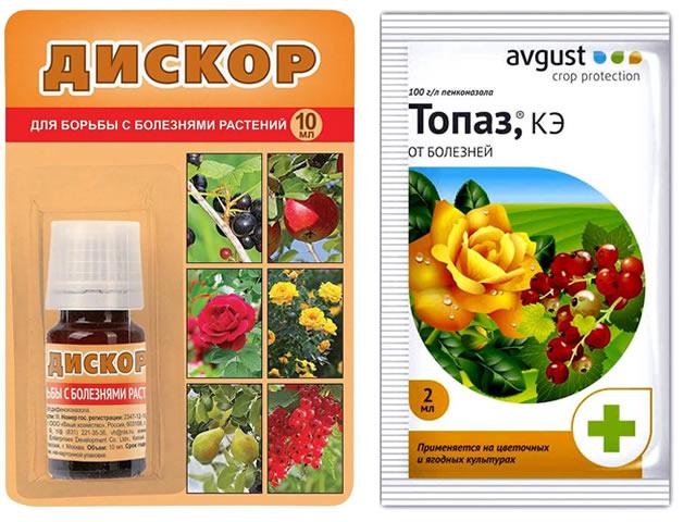 Препараты Дискор и Топаз для защиты клубники Кама от пятнистости