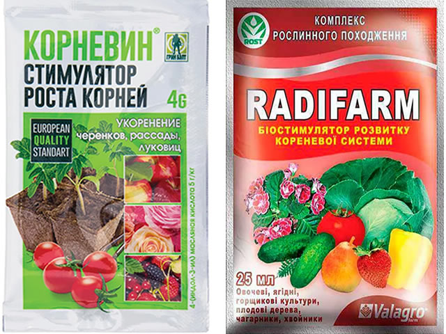 Корневин и Радифарм - стимуляторы корнеобразования на клубнике