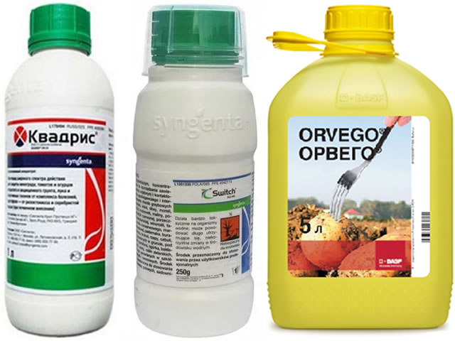 Квадрис, Свитч, Орвего для защиты клубники Фурор от болезней и вредителей