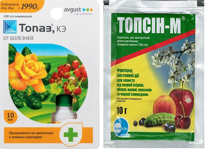Препараты Топаз и Топсин для защиты клубники Сальса от болезней и вредителей