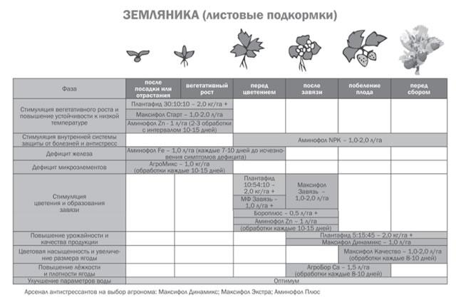Схема листовых подкормок клубники