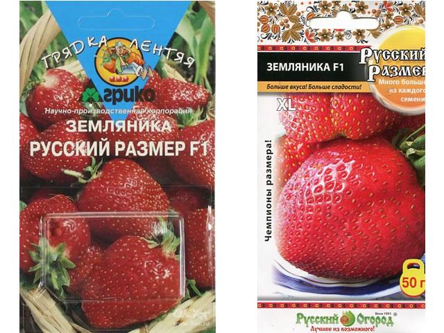 Семена клубники сорт Русский размер