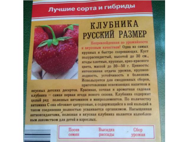 Описание клубники сорт Русский размер