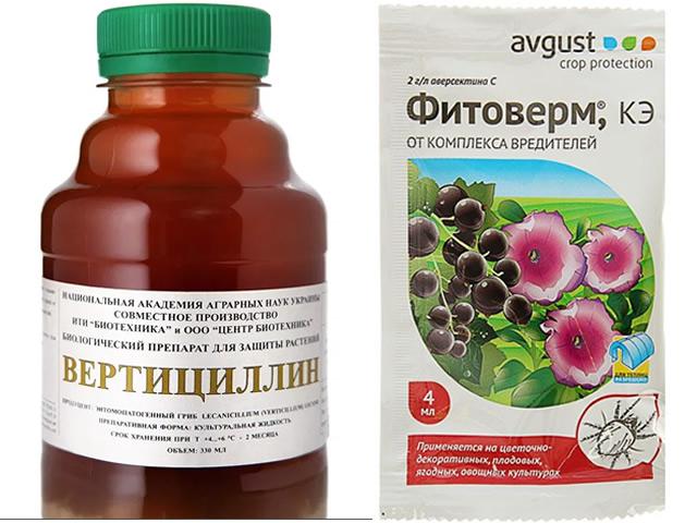 Вертициллин и Фитоверм биопрепараты для борьбы с белокрылкой