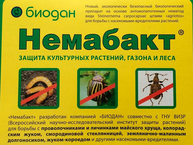 Препарат Немабакт для борьбы с хрущем