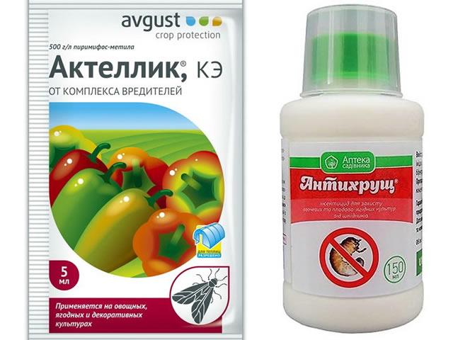 Препараты Актеллик и Антихрущ для защиты клубники Лия сахарная от болезней и вредителей