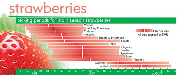 Сроки плодоношения различных сортов клубники