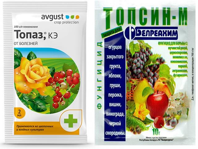 Топаз и Топсин от болезней на клубнике
