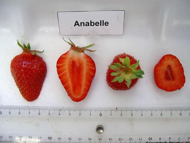 Ягода клубники Аннабель в разрезе