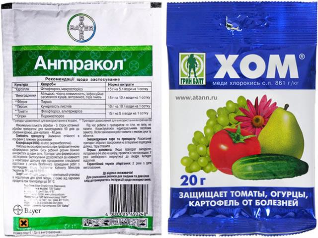 Антракол и ХОМ для борьбы с антракнозом на садовой землянике