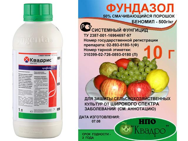 Квадрис и Фундазол для борьбы с антракнозом на клубнике