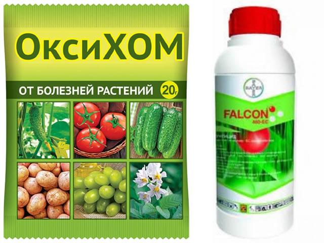 Препараты ОксиХОМ и Фалькон для борьбы с бурой пятнистостью листьев садовой земляники