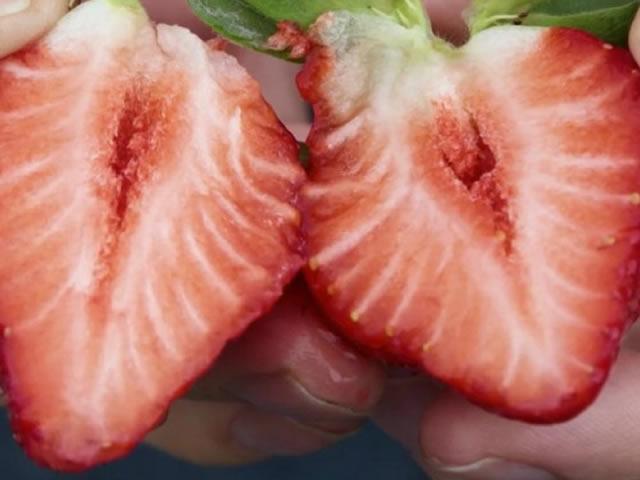 Крупный плод клубники сорт Флорида Бьюти в разрезе