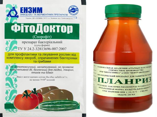 Фитодоктор и Планриз от ржавчины листьев клубники