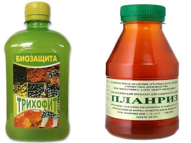 Трихофит и Планриз от фузариоза на клубнике