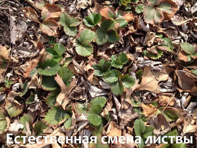 Естественная смена листвы