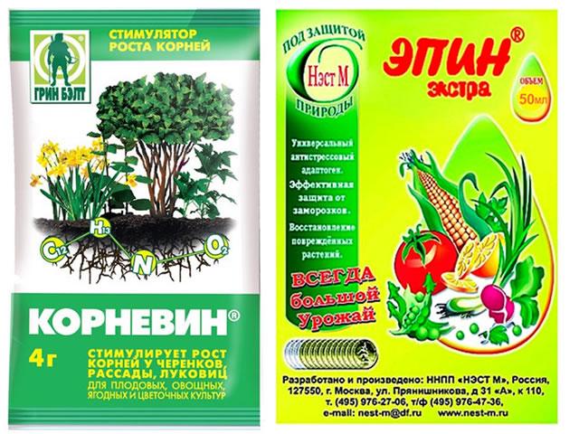 Корневин и Эпин для стимулирования роста корней клубники