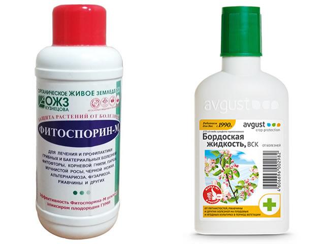 Бордоская жидкость и Фитоспорин для профилактики болезней на клубнике