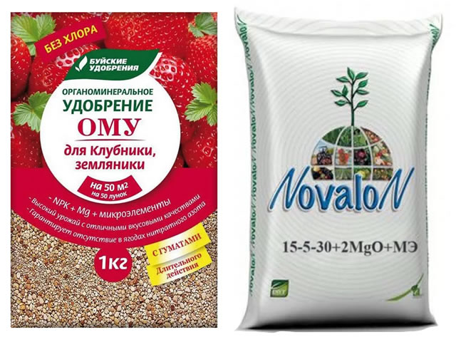 Подкормка клубники препаратами ОМУ и Новалон
